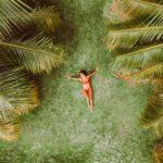 Palmboom kopen